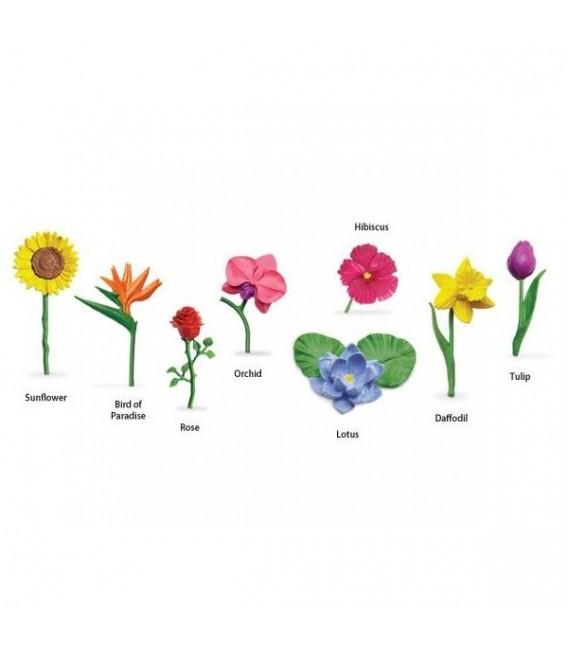 Kvety safari