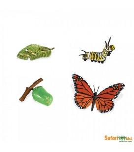 Životný cyklus motýľa (Safari)