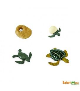 Životný cyklus - Morská korytnačka (Safari)