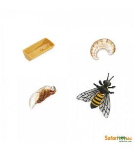 Životný cyklus včely (Safari)