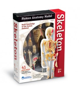 Model ľudského tela 4D Kostra