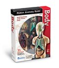 Model ľudského tela 4D Orgány
