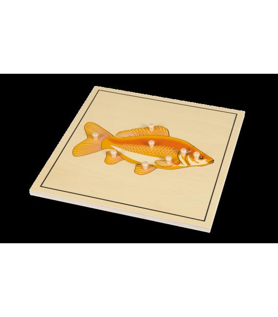 Montessori puzzle ryba