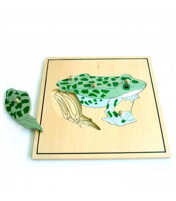 Montessori puzzle žaba