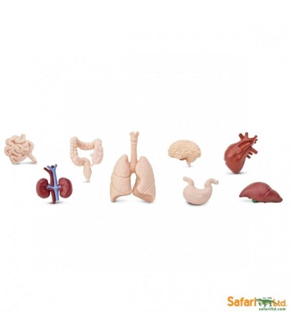 vrecko - Ľudské orgány