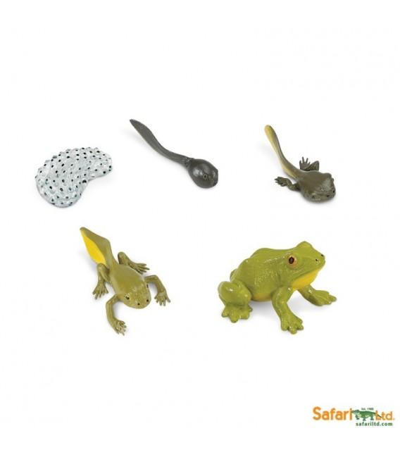 Životný cyklus žaby (Safari)
