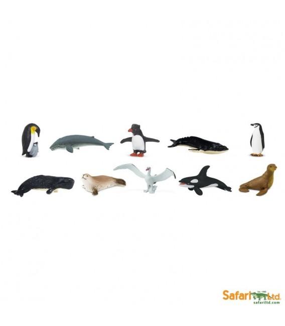 Antarktída, tuba Safari