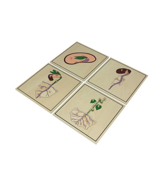 Montessori puzzle Proces rastu