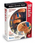 Model ľudského tela 4D Mozog