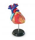 Model ľudského tela 4D Srdce