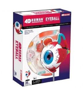 Model ľudského tela 4D Oko
