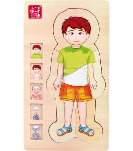 Viacvrstvové anatomické puzzle - chlapec