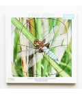 Viacvrstvové puzzle Vývoj vážky