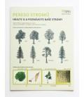 Pexeso Stromy - Hrajte sa a spoznávajte naše stromy