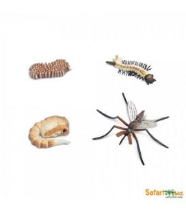 Životný cyklus - Komár (Safari)