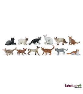 Domáce mačky, tuba Safari
